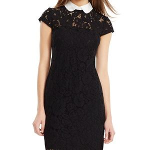 Lauren Ralph Lauren Dresses - Lauren Ralph Lauren lace contrast collar Dress